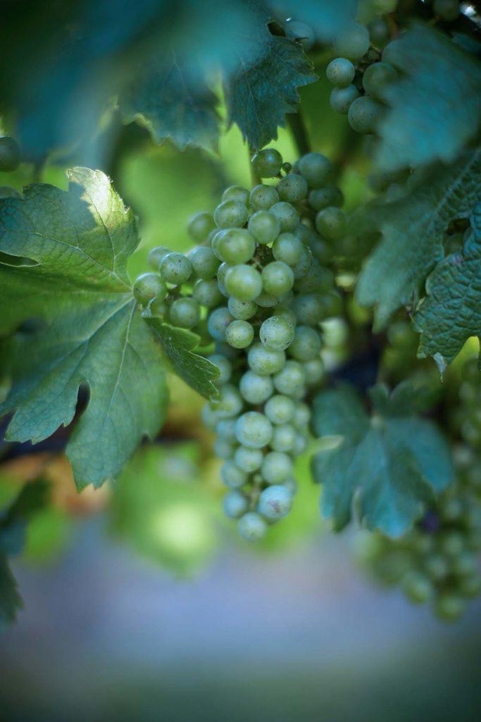 agence branding vin alcool